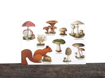 4 Stk. Postkarten Pilz, Eichhörnchen, Grußkarte, Ansichtskarte, Miniposter, Kunstkarte vintage