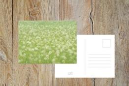"Fotografie Postkarte ""Blumenwiese"" -"