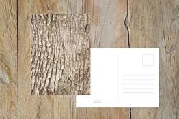 """Fotografie Postkarte """"Eiche"""" -"""