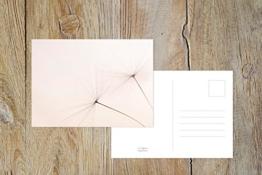 """Fotografie Postkarte """"Hauchzart"""" -"""