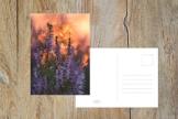 "Fotografie Postkarte ""Heide"" -"